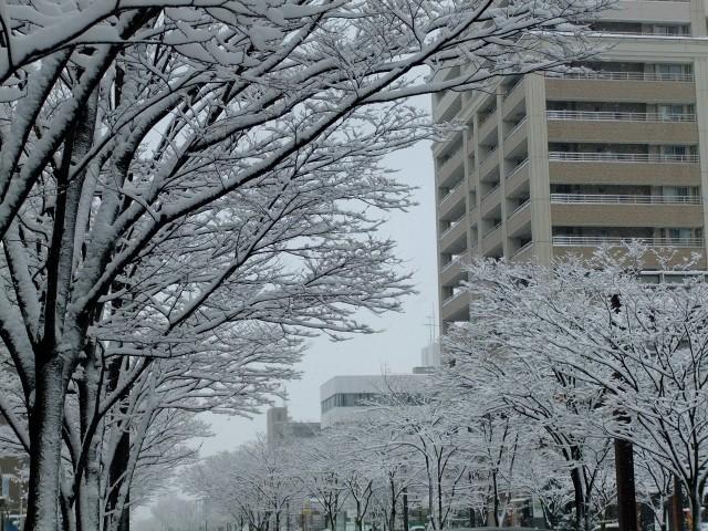 「雪の新潟」の画像検索結果